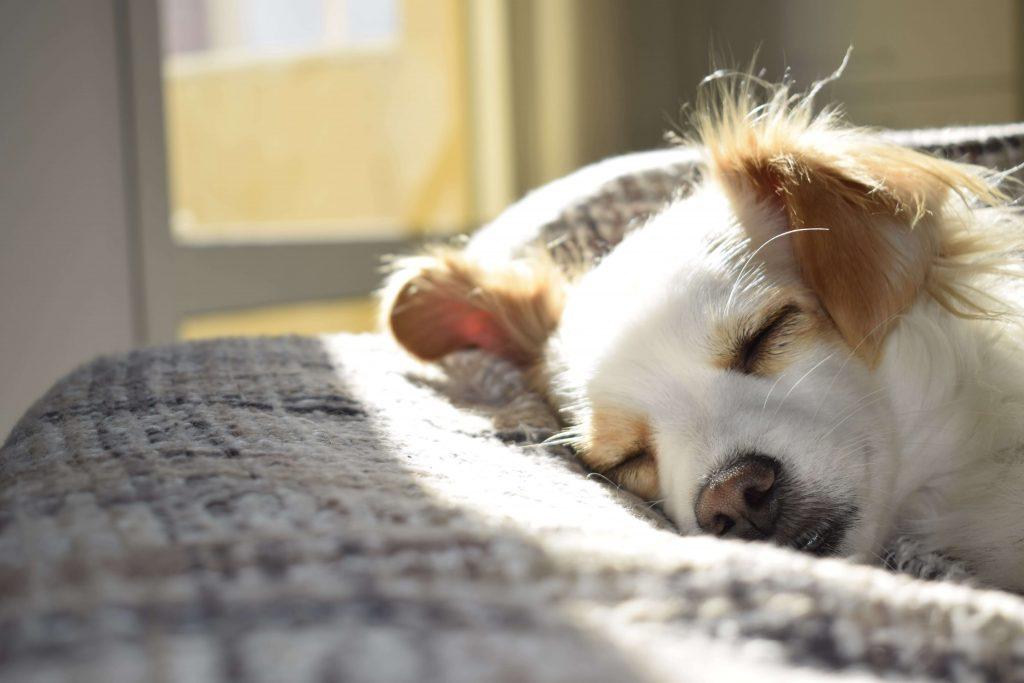 dog training chermside