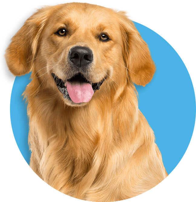 Dog Training Begins