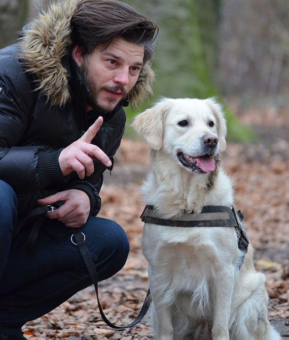 dog training brisbane