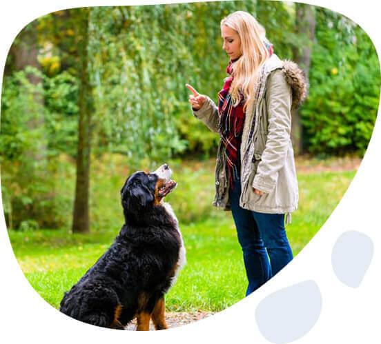 dog trainer in brisbane