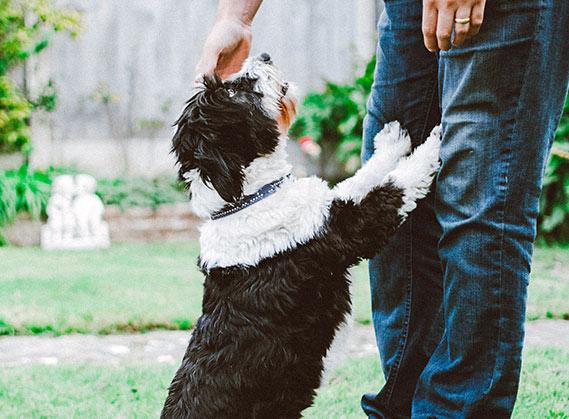 puppy-img