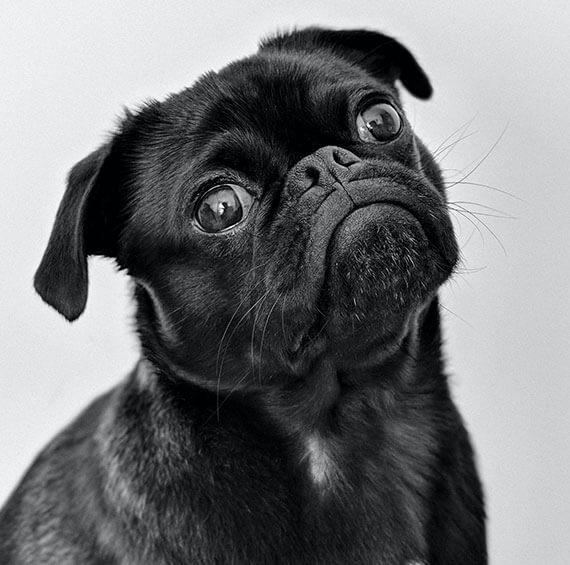 puppy-training-brisbane